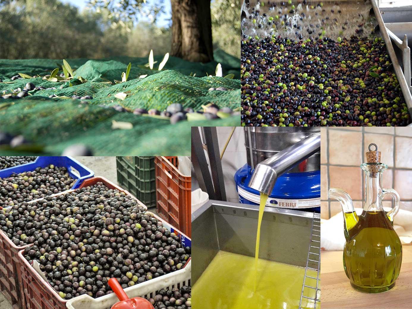 Natives italienisches Olivenöl extra von herausragender Qualität kalt gepresst Online Kaufen